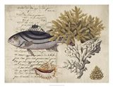 Sealife Journal III Art Print