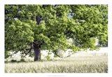 Tree in Summer Art Print