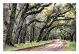 Dirt Road II Art Print