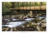 Bridge and Cascade I Art Print