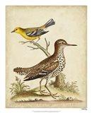 Antique Bird Menagerie I Art Print