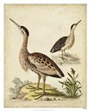 Antique Bird Menagerie III Art Print