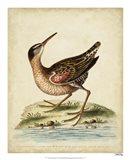 Antique Bird Menagerie IV Art Print
