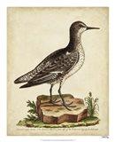 Antique Bird Menagerie V Art Print