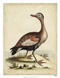 Antique Bird Menagerie VI Art Print