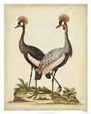 Antique Bird Menagerie VII Art Print