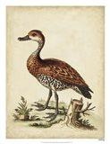 Antique Bird Menagerie VIII Art Print