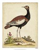 Antique Bird Menagerie IX Art Print