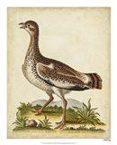 Antique Bird Menagerie X Art Print