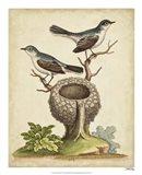 Natural Habitat II Art Print