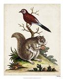 Edwards Squirrel Art Print