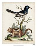 Edwards Chipmunk Art Print