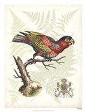 Regal Parrots I Art Print