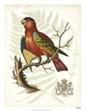 Regal Parrots II Art Print