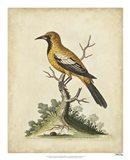 Edwards Gold Finch Art Print