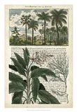 Journal of the Tropics I Art Print