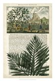 Journal of the Tropics II Art Print