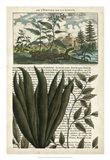 Journal of the Tropics III Art Print