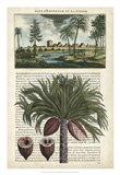 Journal of the Tropics IV Art Print