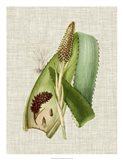 Elegant Tropicals I Art Print