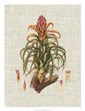 Elegant Tropicals IV Art Print