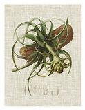 Elegant Tropicals V Art Print