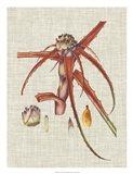 Elegant Tropicals VI Art Print