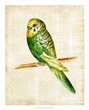 Fanciful Birds III Art Print