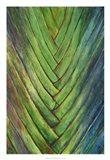 Tropical Crop I Art Print