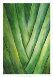 Tropical Crop III Art Print