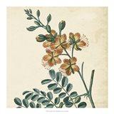 Garden Bounty III Art Print