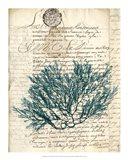 Vintage Teal Seaweed I Art Print