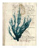 Vintage Teal Seaweed II Art Print