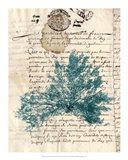 Vintage Teal Seaweed III Art Print