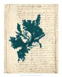 Vintage Teal Seaweed IV Art Print