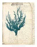 Vintage Teal Seaweed V Art Print
