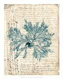 Vintage Teal Seaweed VI Art Print