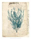 Vintage Teal Seaweed VII Art Print