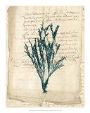 Vintage Teal Seaweed VIII Art Print