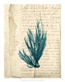 Vintage Teal Seaweed IX Art Print