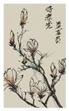 Mandarin Magnolia I Art Print