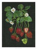 Strawberry Fields II Art Print