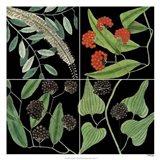 Graphic Botanical Grid IV Art Print