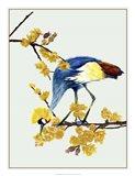 Chimonanthus Praecox I Art Print