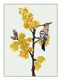 Chimonanthus Praecox II Art Print
