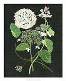 White Hydrangea Study I Art Print
