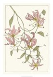 Botanical Gloriosa Lily II Art Print