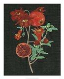 Pomegranate Study I Art Print