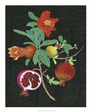 Pomegranate Study II Art Print