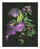 Calliandra Surinamensis II Art Print